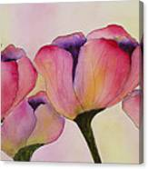 Elegant Tulips  Canvas Print