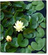 Elegant Water Lily Canvas Print