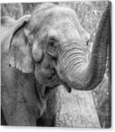 Elephant And Tree Trunk Black And White Canvas Print