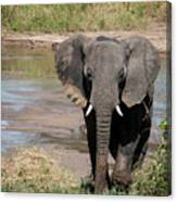 Elephant At The River Canvas Print