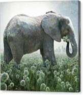 Elephant Eating Onions Canvas Print