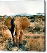 Elephant Eyes Canvas Print