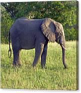 Elephant Feeding Canvas Print