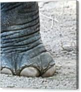 Elephant Foot Canvas Print