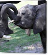 Elephant Greeting II Canvas Print