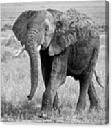 Elephant Happy And Free In Black And White Canvas Print