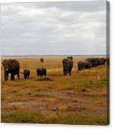 Elephant Herd Canvas Print