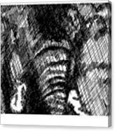 Elephant In Crosshatch Canvas Print