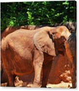 Elephant In Red Clay Canvas Print