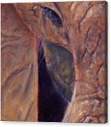 Elephant Macro Canvas Print