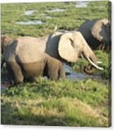 Elephant Mother And Calves Canvas Print