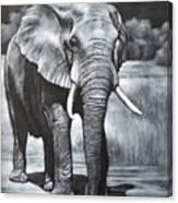 Elephant Night Walker Canvas Print