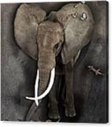 Elephant No 04 Canvas Print