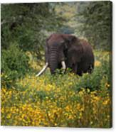Elephant Of The Crater Canvas Print