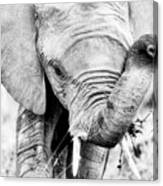 Elephant Portrait In Black And White Canvas Print