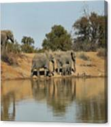 Elephant Refelction Canvas Print