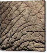 Elephant Skin Background Canvas Print