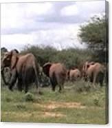 Elephant Walk Tsavo National Park Kenya Canvas Print