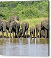 Elephants At The Waterhole   Canvas Print