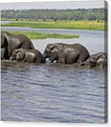 Elephants Crossing Chobe River Canvas Print