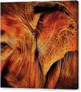 Elephant's Ear Canvas Print