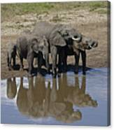 Elephants In The Mirror Canvas Print