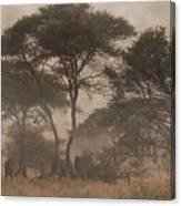 Elephants On The Serengeti Foggy Evening Canvas Print