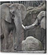 Elephants Playing 3 Canvas Print