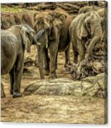 Elephants Social Canvas Print