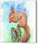 Elevenses - Red Squirrel Canvas Print