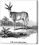 Elk Antelope Canvas Print