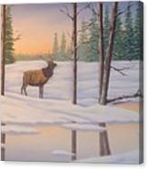 Elk  Carter Canvas Print