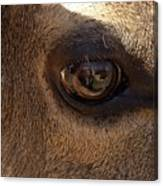 Elk Eye Close Up Canvas Print