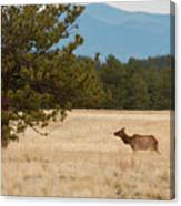 Elk In The Fossil Beds Canvas Print