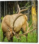 Elk In The Woods Canvas Print