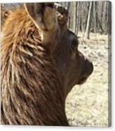 Elk Profile Canvas Print