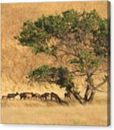 Elk Under Tree Canvas Print