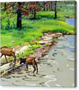 Elks Crossing Canvas Print
