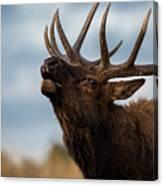 Elk's Screem Canvas Print