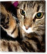 Ellie Cat Canvas Print