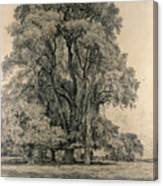 Elm Trees In Old Hall Park Canvas Print