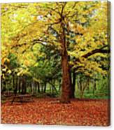 Elora Gorge Campsite In Fall Canvas Print
