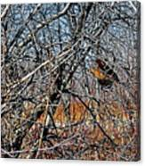 Elusive Woodcock's Woody Environment Canvas Print