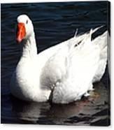 Embden Goose 2 Canvas Print