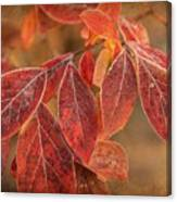 Embers Of Autumn Canvas Print