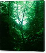 Emerald Glade Canvas Print