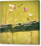 Emerging Beauties - Y11a Canvas Print