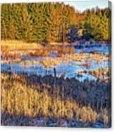 Emerging Marsh Canvas Print