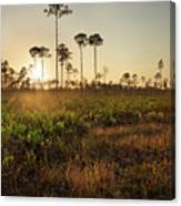 Empty Skies Over Picayune Strand Canvas Print