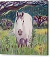 En El Bosque Canvas Print